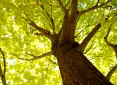 image of brighten  - Photo taken under a beautiful maple tree with sunshine brightening up the whole photo - JPG
