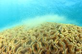 image of spawn  - Coral spawning underwater - JPG