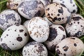 Small Group Of Dappled Quail Eggs