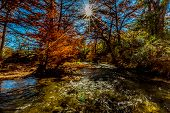 image of guadalupe  - Sunburst of Beautiful Fall Foliage Surrounding the Guadalupe River Texas - JPG