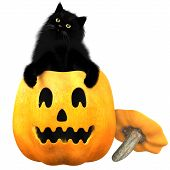 image of molly  - A black domestic cat and a carved pumpkin are typical symbols of the Halloween holiday - JPG
