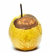 picture of rotten  - rotten snow pear on a white background - JPG