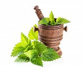stock photo of nettle  - fresh nettle leaves with a mortar on a white background - JPG