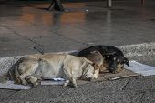 picture of stray dog  - stray dogs sleeping on the cardboard in the street