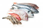 stock photo of saltwater fish  - Fresh catch of fish and other seafood isolated on white background - JPG
