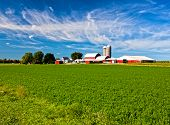 stock photo of soybeans  - American Country Farm with soybean plants and blue sky - JPG