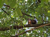 pic of acorn  - Squirrel eats acorn on a branch in the wood - JPG