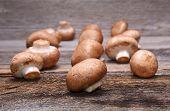 stock photo of champignons  - Brown champignon on wooden background in studio - JPG