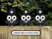 foto of policeman  - Comical British bird policemen with crime prevention zone sign perched on a timber garden fence against a foliage background - JPG