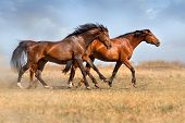 stock photo of wild horse running  - Group of beautiful horse run gallop on field with dust - JPG