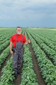 image of soybeans  - Farmer or agronomist examine soybean plant field and gesturing - JPG