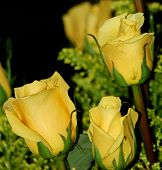 stock photo of yellow rose  - Shot of beatiful yellow roses in a vase - JPG