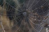 stock photo of spider web  - The dew drops covered neatly the entire spider web and highlight the amazing structure of the web - JPG