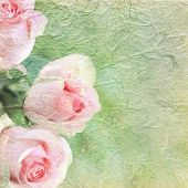 image of pink roses  - Pink roses on background with copy space - JPG