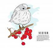 Small Bird On A Twig Vector Illustration. Nature Botanical Sketch. Winter Holidays Print. Little Bir poster