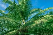 Palm Trees Against Blue Sky. poster