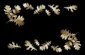 Frame Of Golden Oak Leaves. Golden Leaves Of Oak And Acorns On A Black Background.  Festive Decorati poster