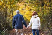 A Rear View Of A Senior Couple Walking In An Autumn Nature. poster