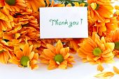 picture of thank you card  - Chrysanthemum orange flowers on a white background - JPG