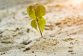 Young Tree Growing On Sand In Nature, Close Up. Sprout Of A Tree Punching Through Sand. Young Tree G poster