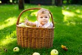 Cute Baby Girl Sitting In Basket Full With Ripe Apples On A Farm In Early Autumn. Little Baby Girl P poster