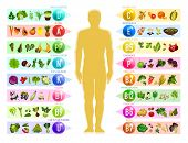 Vitamin And Mineral In Food. Human Silhouette With Chart Of Vegetable, Fruit And Nut, Cereal And Ber poster