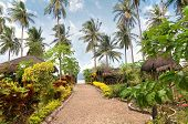 pic of garden eden  - Foothpath in a tropical garden - JPG