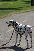 stock photo of happy dog  - Day at the Dog Beach - JPG