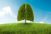 picture of oxygen  - Tree with form of lungs oxygen for the earth - JPG