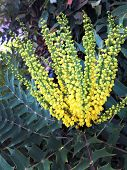 foto of rare flowers  - An image of rare yellow flower blossom and green shrubbery - JPG