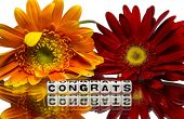 pic of congrats  - Congrats with red and yellow flowers on white - JPG
