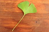 Ginkgo biloba leaf on wooden background