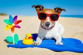 stock photo of sunbathers  - dog plays with sunglasses at the beach on summer vacation holidays - JPG