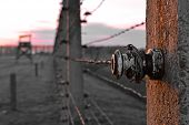 picture of auschwitz  - Barbed Wire of Auchwitz - JPG