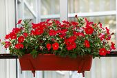 stock photo of petunia  - Flower decorated terrace of a house - JPG