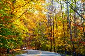 stock photo of curvy  - A small truck approaches on curvy road climbing through a sunlit autumn woods - JPG