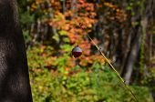 picture of fishing bobber  - A red and white fishing bobber and fishing pole - JPG