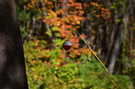 stock photo of fishing bobber  - A red and white fishing bobber and fishing pole - JPG