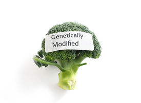 picture of modifier  - Fresh broccoli on white with Genetically Modified label - JPG