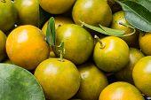 picture of clementine-orange  - Some fresh - JPG