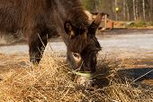 foto of donkey  - The donkey on a farmstead eats a grass - JPG
