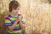 pic of pentecostal  - Praying little boy in the park on a sunny day - JPG