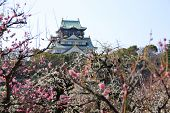 stock photo of kinky  - Osaka Castle and plum blossoms in spring season - JPG