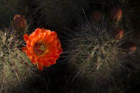 image of spiky plants  - Desert bloom  - JPG