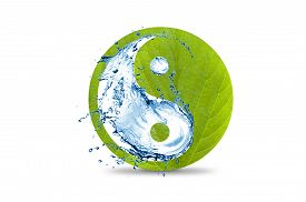 stock photo of yin  - An ecological yin and yang symbol of water and a leaf isolated on white background - JPG