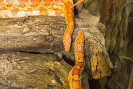 picture of tree snake  - Two snakes in a terrarium on a tree trunk