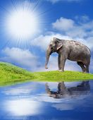 image of daylight-saving  - Elephant on the coast - JPG