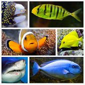 Marine life collage composed of pictures with underwater theme.