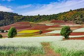 fields landscaped Shan state Myanmar poster