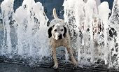 stock photo of hot-weather  - Dog on a hot summer day - JPG